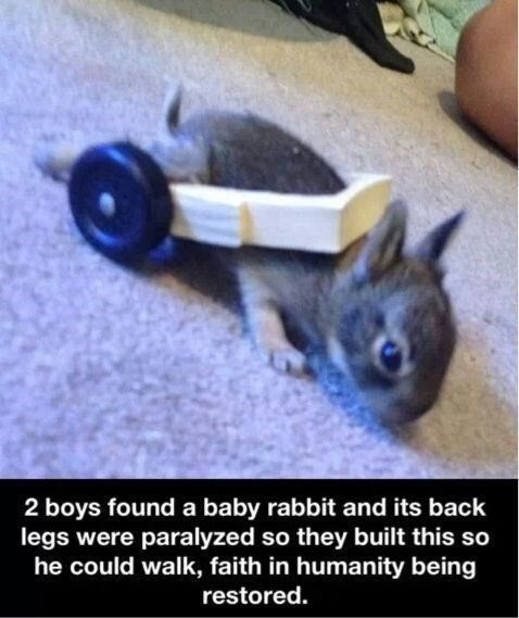 wholesome meme - Photo caption - 2 boys found a baby rabbit and its back legs were paralyzed so they built this so he could walk, faith in humanity being restored.