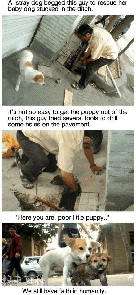 """wholesome meme - Adaptation - A stray dog begged this guy to rescue her baby dog stucked in the ditch. It's not so easy to get the puppy out of the ditch, this guy tried several tools to drill some holes on the pavement. """"Here you are, poor little puppy.. We still have faith in humanity."""