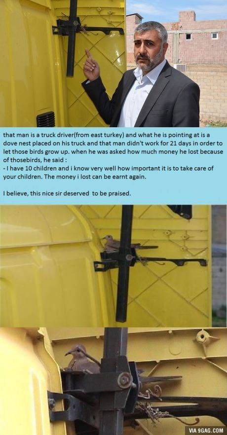 wholesome meme - Yellow - that man is a truck driver(from east turkey) and what he is pointing at is a dove nest placed on his truck and that man didn't work for 21 days in order to let those birds grow up. when he was asked how much money he lost because of thosebirds, he said: -I have 10 children and i know very welll how important it is to take care of your children. The money i lost can be earnt again. I believe, this nice sir deserved to be praised. VIA 9GAG.COM