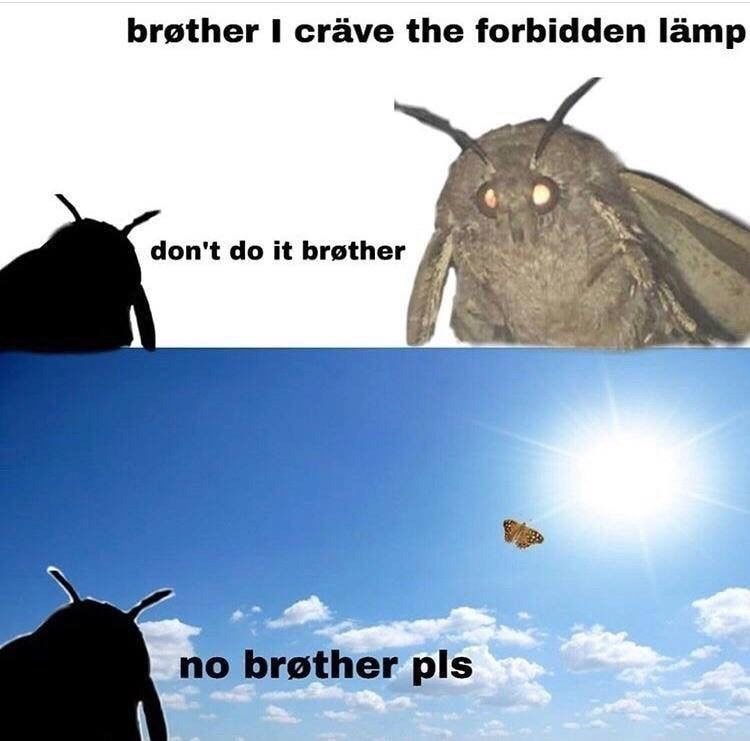 wholesome meme of a moth craving the forbidden lamp