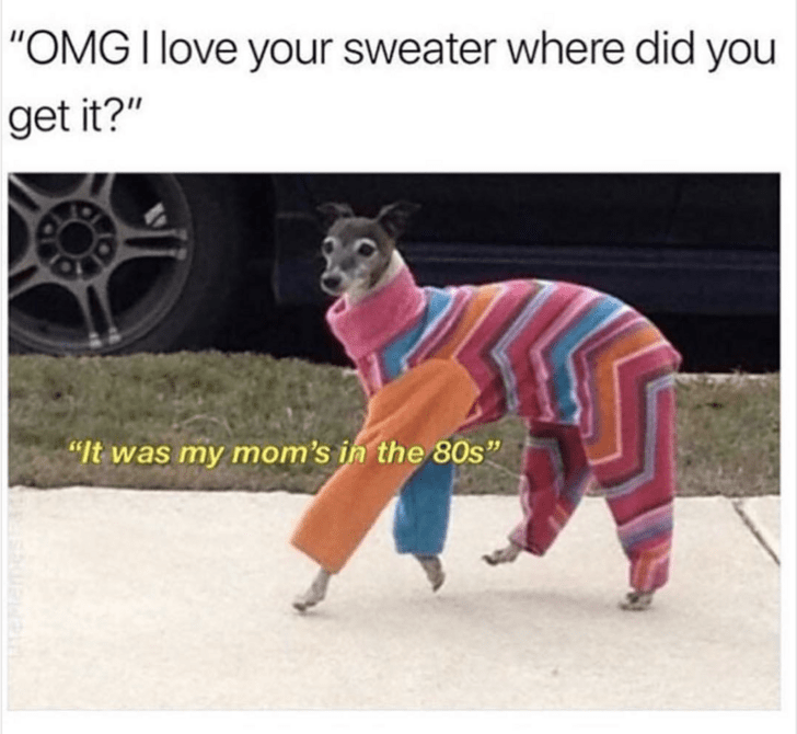 wholesome meme of a dog wearing a sweater from his moms clothes in the 80's