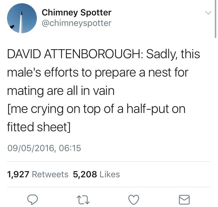 Text - Chimney Spotter @chimneyspotter DAVID ATTENBOROUGH: Sadly, this male's efforts to prepare a nest for mating are all in vain [me crying on top of a half-put on fitted sheet] 09/05/2016, 06:15 1,927 Retweets 5,208 Likes Σ