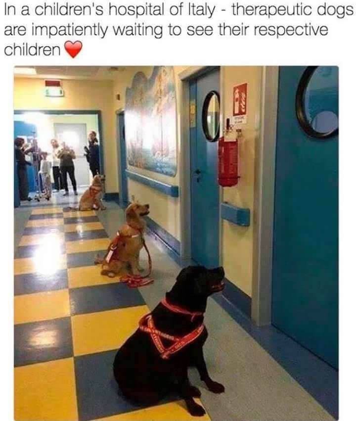 wholesome meme of therapeutic dogs in a children's hospital in Italy