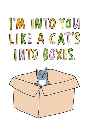 Cat - IM INTO YOU LIKE A CAT'S INTO BOXES