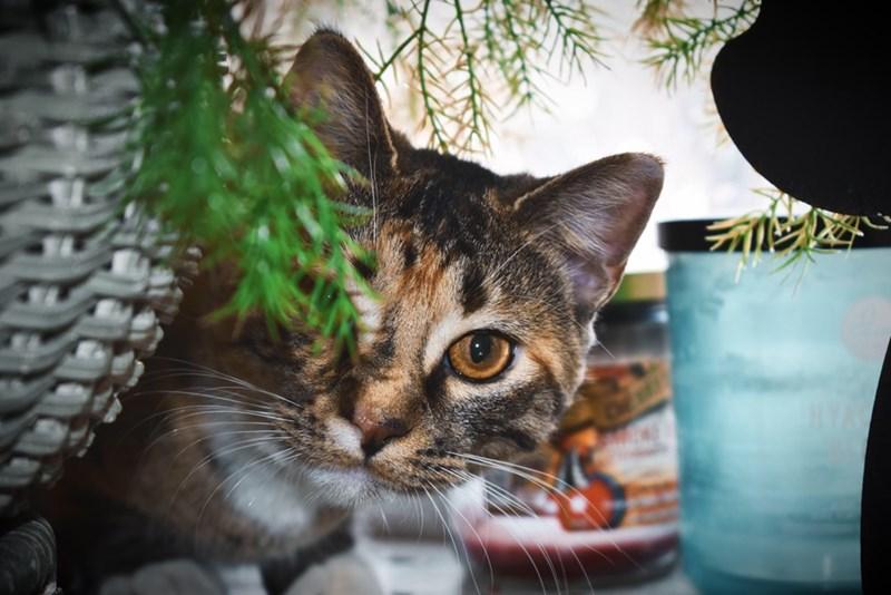 cute cat peeking its head from a hiding spot