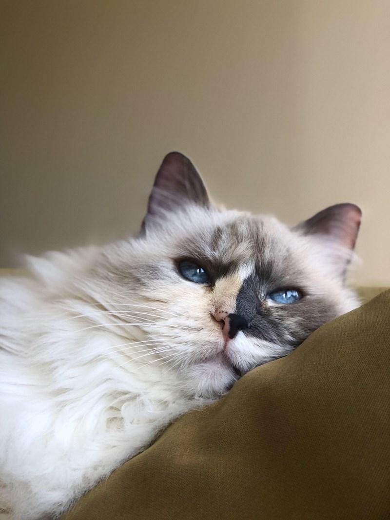 cute cat resting in high resolution