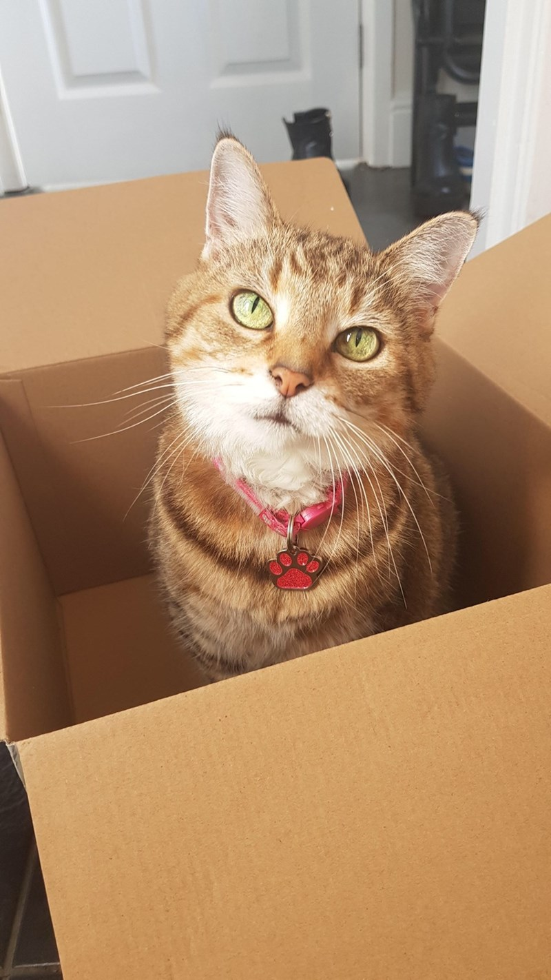 cute cat with green eyes sitting in an empty cardboard box