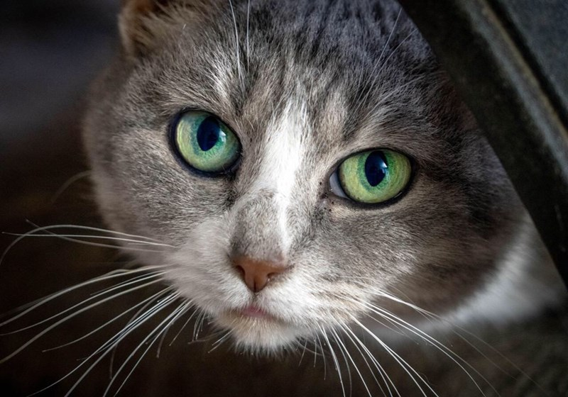 cute cat with bright green eyes staring into the camera in high resolution
