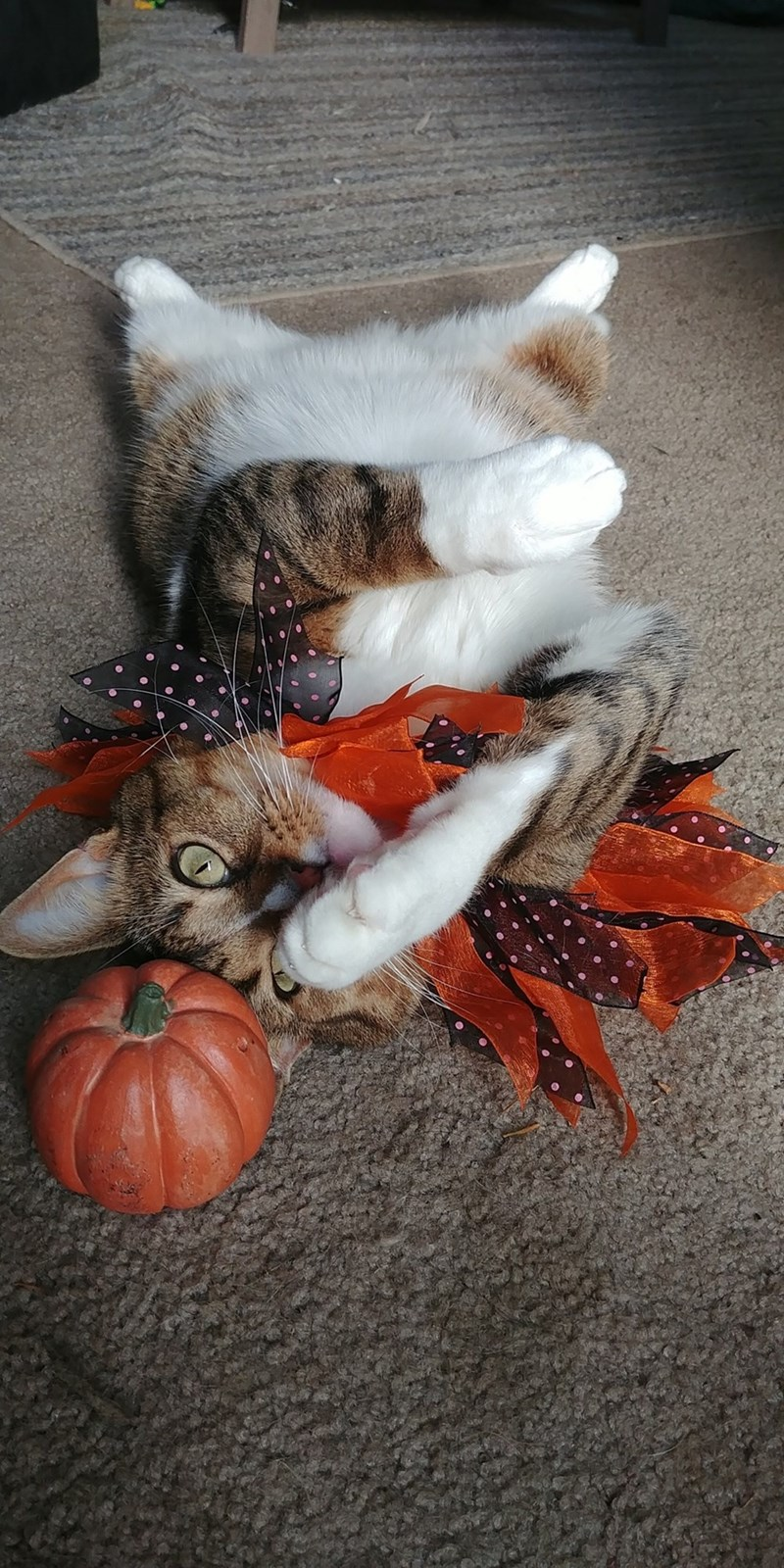 cute cat tangled in Halloween decorations