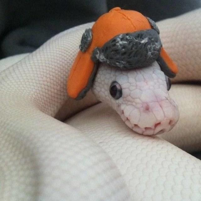 cute animals - Stuffed toy
