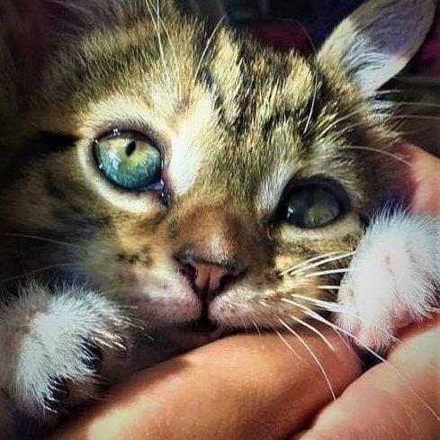cute animals - Cat