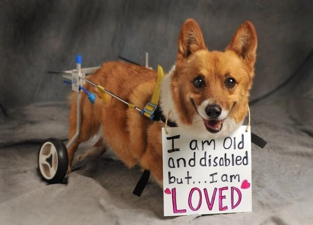 cute animals - Dog - H am oid and disabled but...Iam LOVED