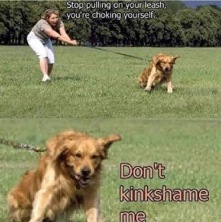 meme - Dog - Stop pulling on your leash, you're choking yourself Don't kinkshame Me.