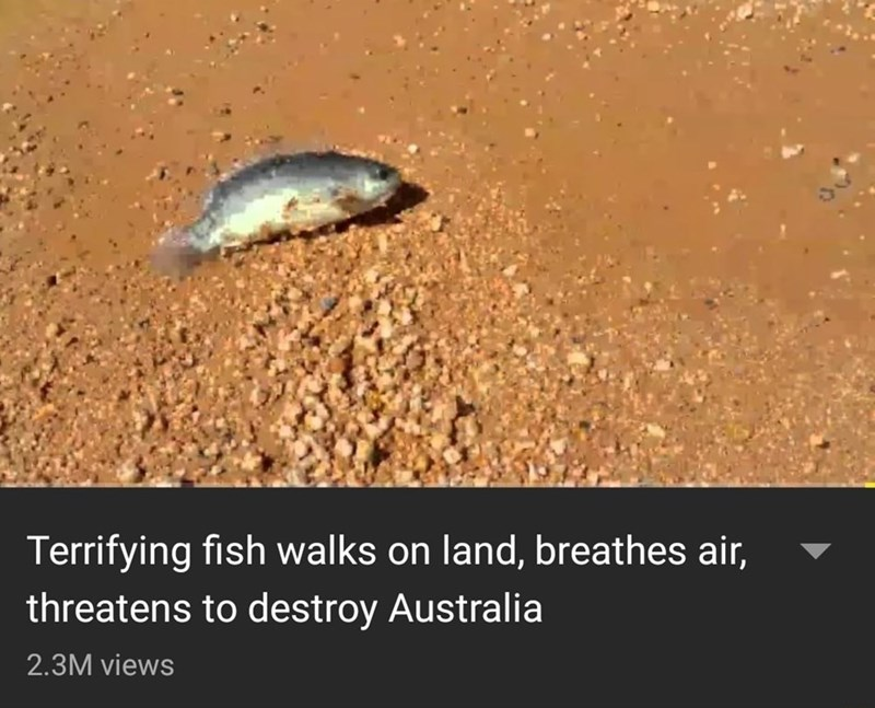 meme - Organism - Terrifying fish walks on land, breathes air, threatens to destroy Australia 2.3M views