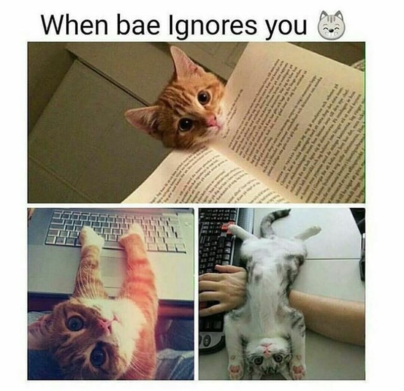 """Caption that reads, """"When bae ignores you"""" above pics of a kitten wanting attention"""