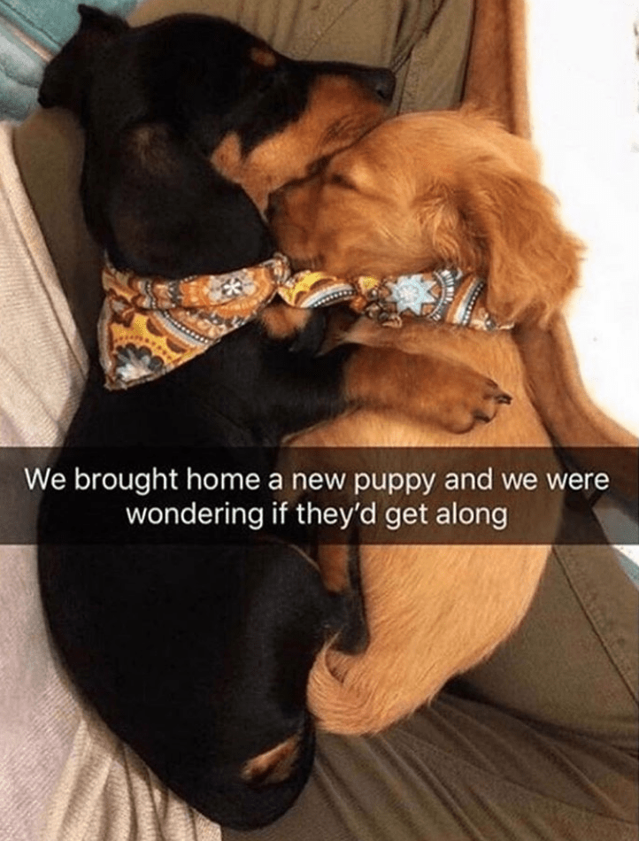 Dog - We brought home a new puppy and we were wondering if they'd get along