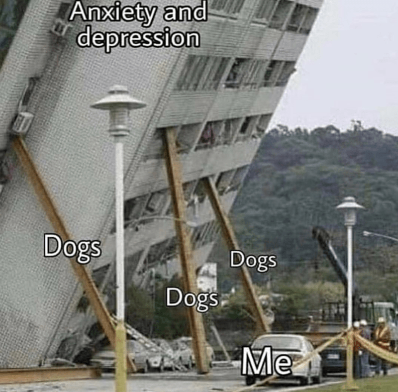 Architecture - Anxiety and depression Dogs Dogs Dogs Me