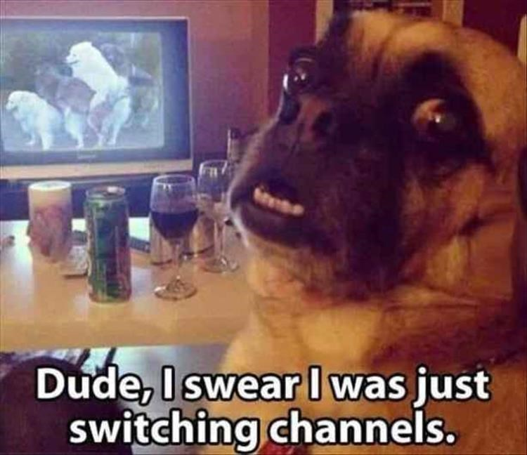 Dog - Dude, Iswear I was just switching channels.