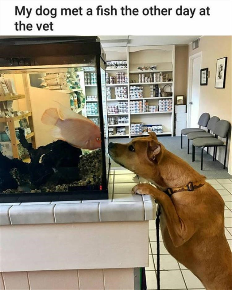 Dog - My dog met a fish the other day at the vet