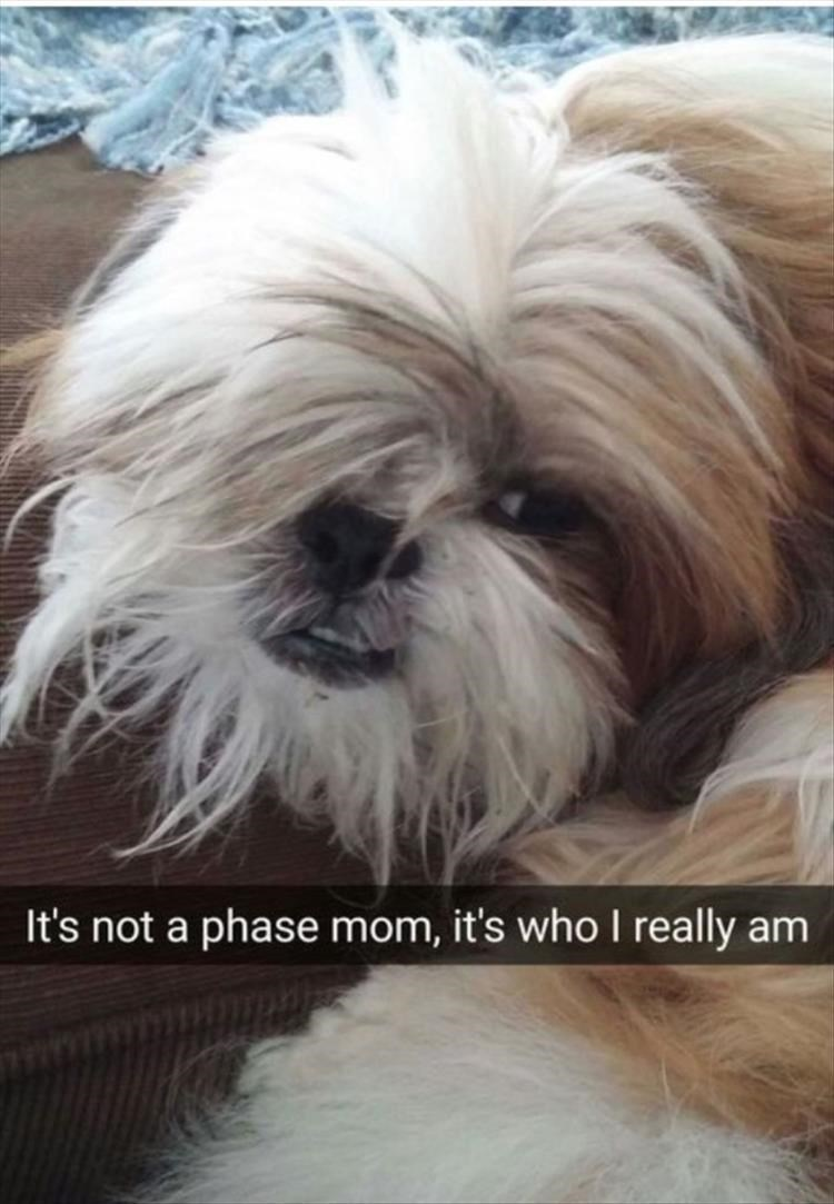 Dog - It's not a phase mom, it's who I really am