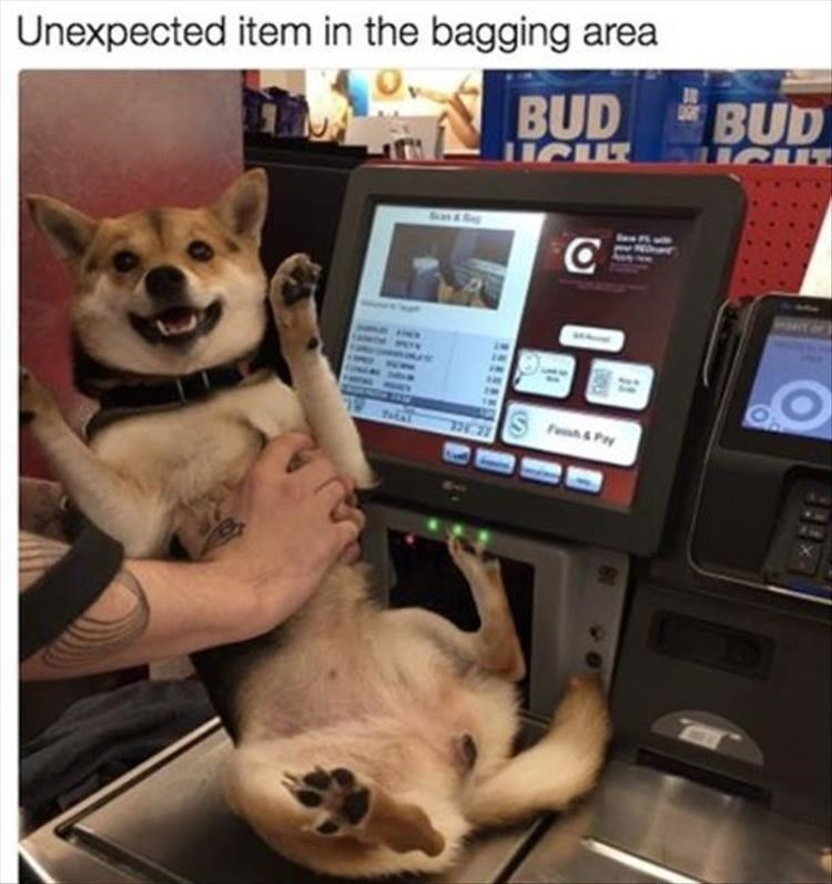 Dog - Unexpected item in the bagging area BUD BUD ICUT C S F&Py