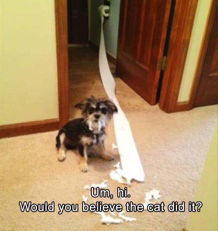 Mammal - Um, hi. Would you believe the cat did it?