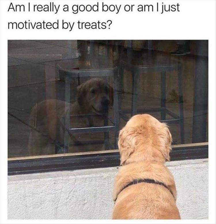 Dog - Am I really a good boy or am I just motivated by treats?
