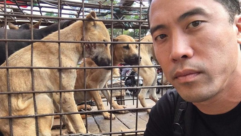 hero dogs yulin festival rescued marc ching rescue - 9270489344