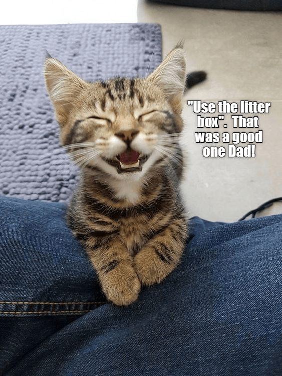 cute cats | caturday meme about kitten not wanting to use litterbox