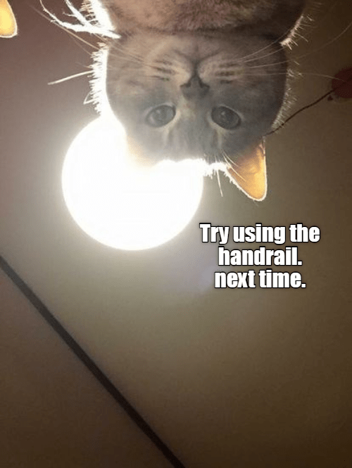cute cat making a snarky comment after you fell