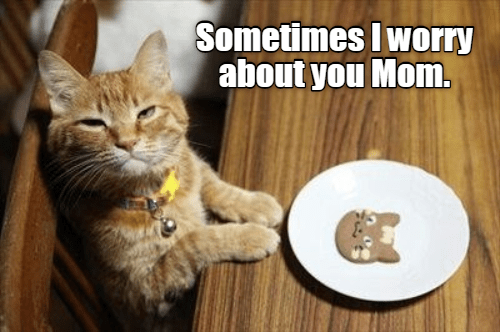 cute cat making a face of disappointment in front of a plate with a cat shaped cookie