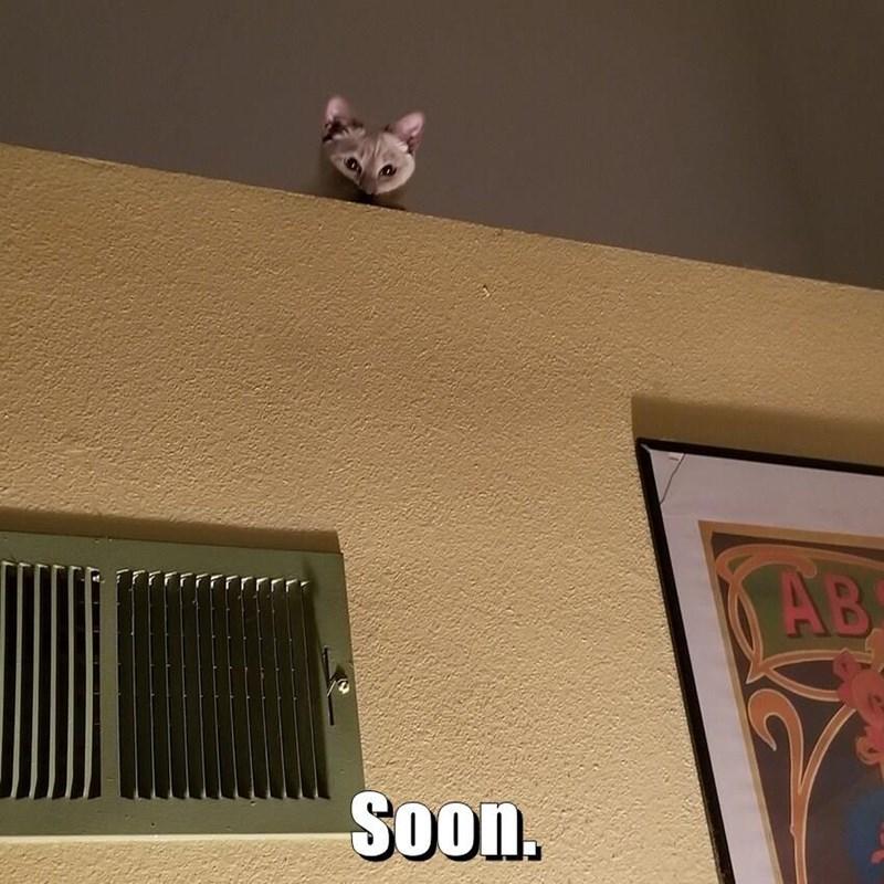 cute cat peeking its head over a wall