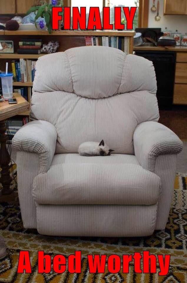 cute cat of a kitten sleeping on an arm chair