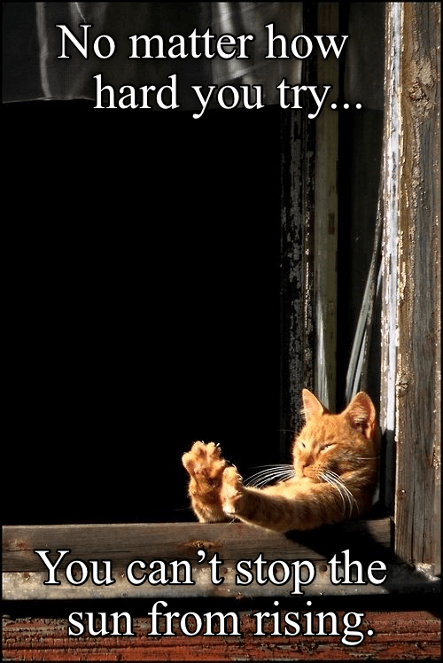 cute cat caturday sitting against a window with the sun shining through