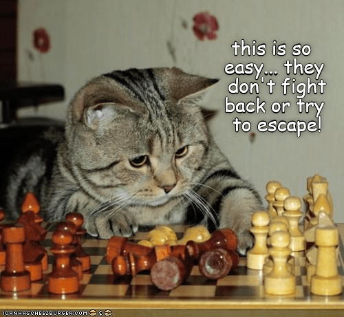 cute cat caturday playing chess and looking confused