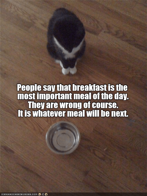 cute cat looking at an empty bowl