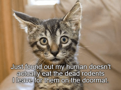 cute cat caturday realizing his owner doesn't eat dead rodents
