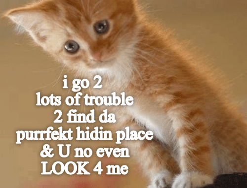 cute cat caturcay of a kitten looking disappointed after hiding and no one looks for him