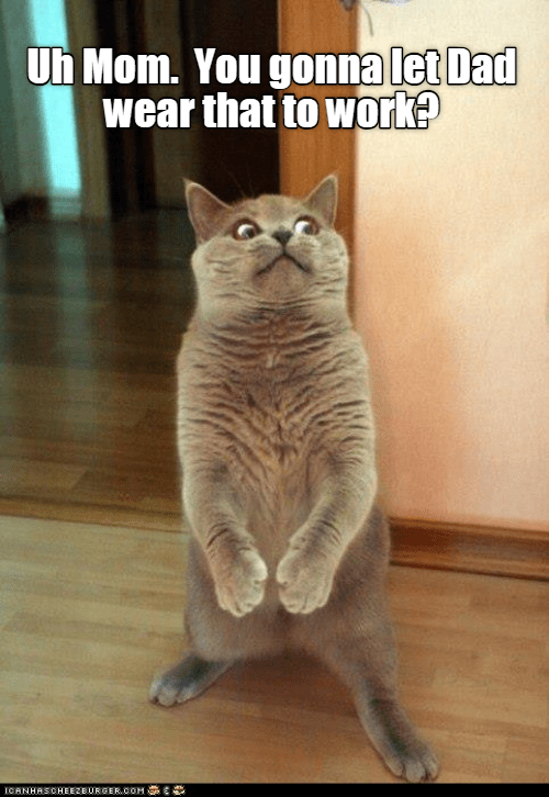 cute cat standing and making a surprised expression
