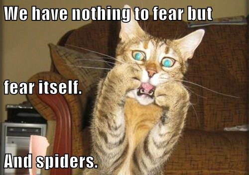 spiders arachnophobia fear phobia cat memes - 9270592768