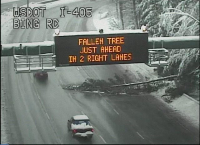 image of sign above highway reading FALLEN TREE JUST AHEAD IN 2 RIGHT LANES and fallen tree under sign