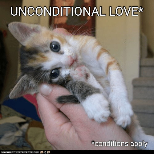 cat meme - Cat - UNCONDITIONAL LOVE conditions apply ICANHASCHEEZBURGER.COH