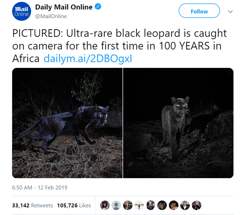 Wildlife - Mail Daily Mail Online Online@MailOnline Follow PICTURED: Ultra-rare black leopard is caught on camera for the first time in 100 YEARS in Africa dailym.ai/2DBOgxl 6:50 AM 12 Feb 2019 33,142 Retweets 105,726 Likes