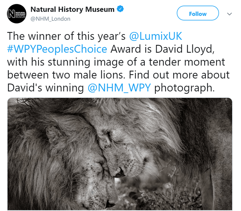 Text - Natural History Museum N NATURAL HISTORY MUSEUM, Follow @NHM_London The winner of this year's @LumixUK #WPYPeoplesChoice Award is David Lloyd, with his stunning image of a tender moment between two male lions. Find out more about David's winning @NHM_WPY photograph.