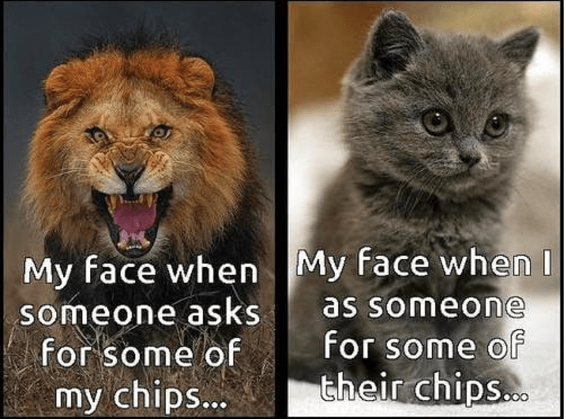 caturday meme about my reaction when i have to share food vs when others share with me