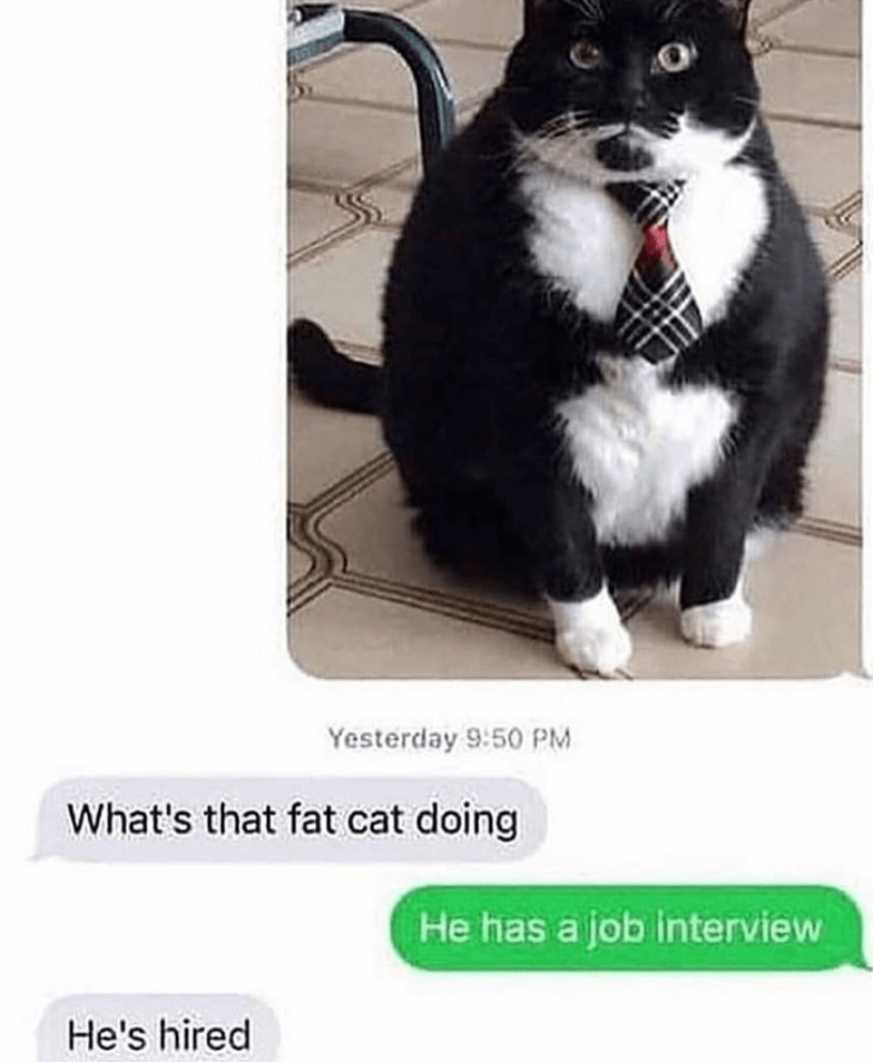caturday meme with a cat in a bow tie