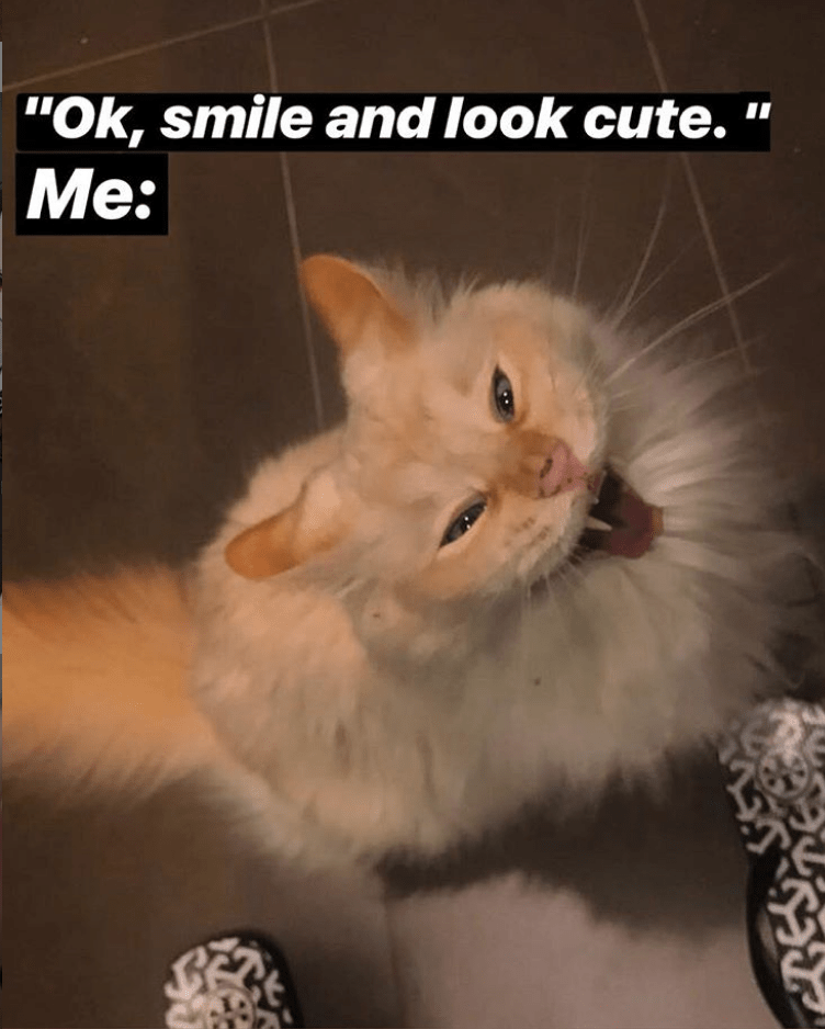 caturday meme with a cat smiling and posing