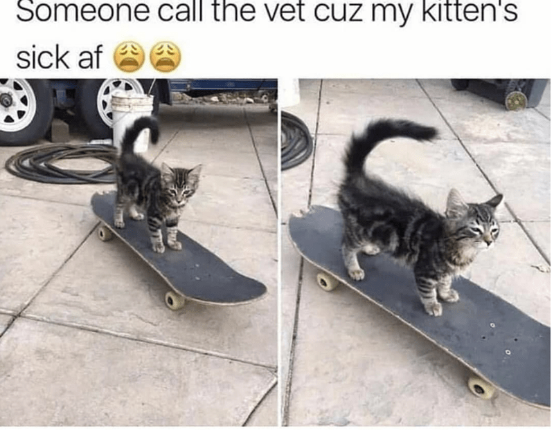 caturday meme about a cool kitten riding a skateboard