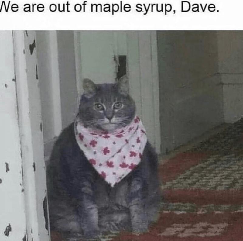 caturday meme with pic of a fat cat in a bib