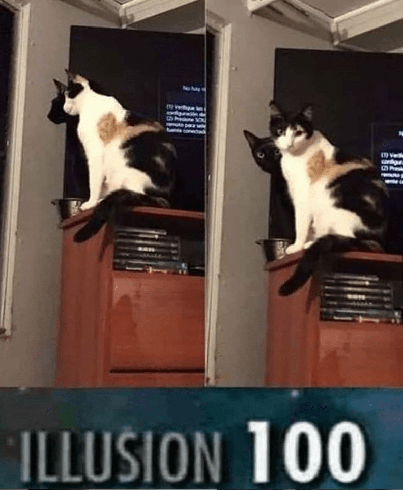 caturday meme about cats mastering the illusion skill
